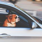 Travel Safely with Your Pets This Summer